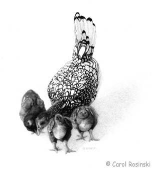 Small scale art of a silver seabright hen with chicks