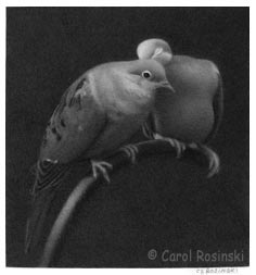 Miniature art of doves by carol rosinski