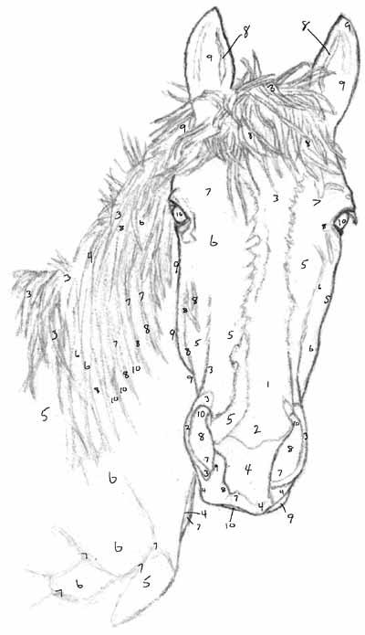 איך מציירים ראש סוס