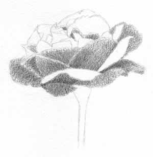 Draw A Flower - Shading