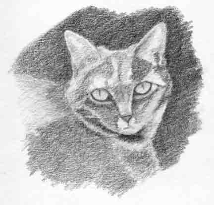 Cat Sketch Step Three
