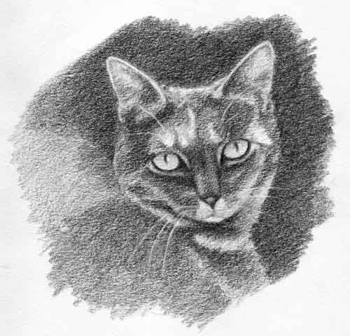 Cat Sketch Step Four